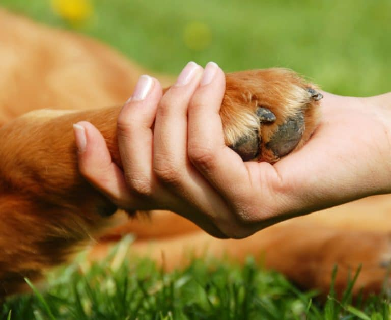 human hand accepting dog's paw